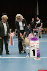 20130510-Bullmastiff-Worldcup-1303.jpg