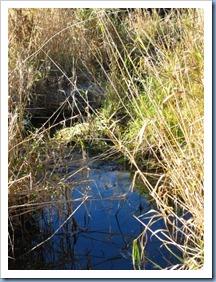 20111105_creek_006