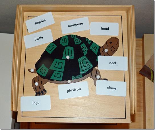 Montessori Reptile Puzzle