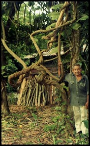 ayahuasca-w