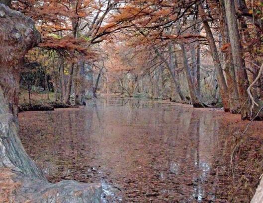 Cypress Creek2