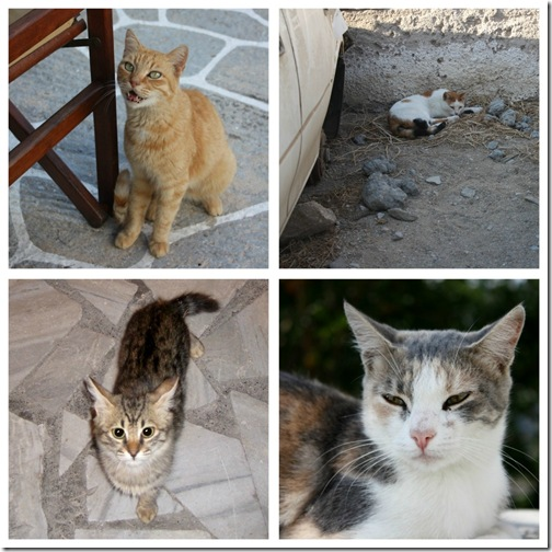 Greek_kitty_collage_2