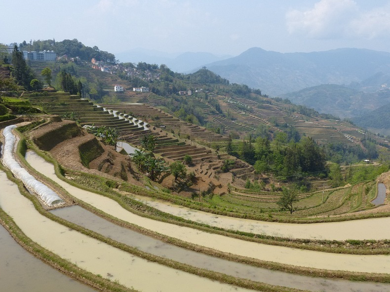 yunnan-rice-terraces-11
