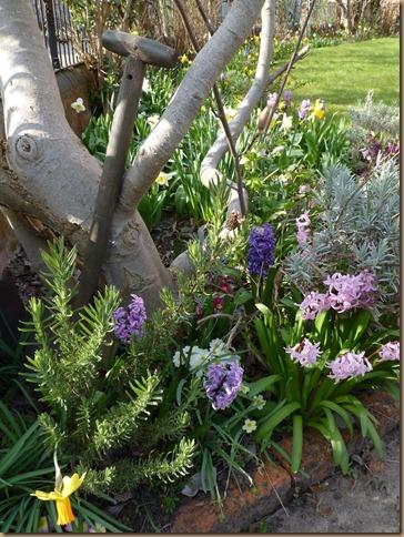 garden march 006