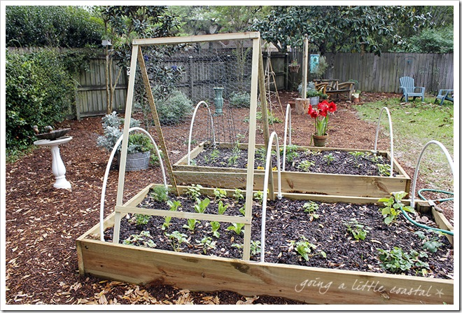 cucumber trellis_edited-1