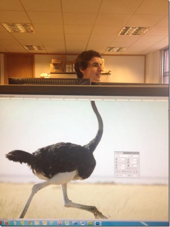 photobomb-coworkers-animal-28