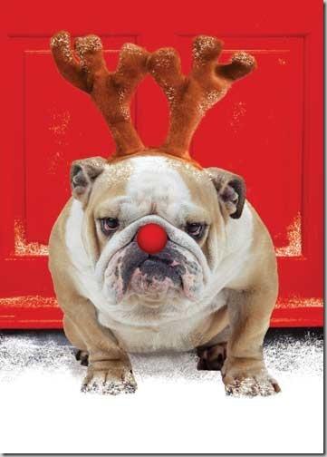 perro gorritos navidad (37)