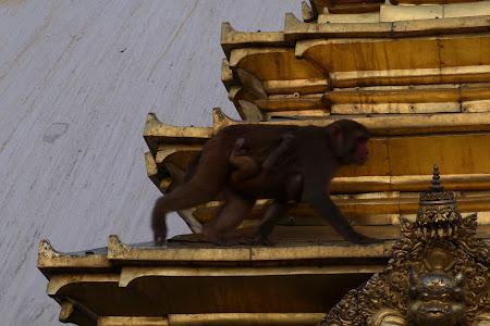 Maimute Nepal