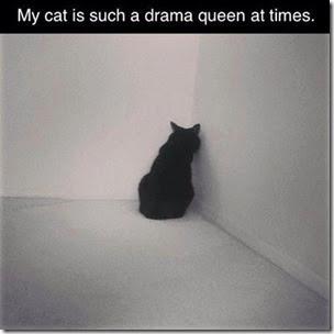 drama queen cat