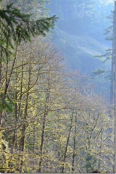 Wahclella Falls Hike 138