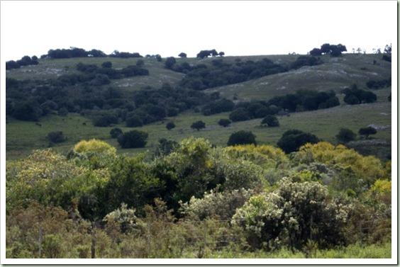 Vegetación herbácea y arbustiva