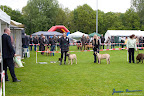 20100513-Bullmastiff-Clubmatch_30902.jpg