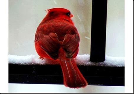 vermelho3