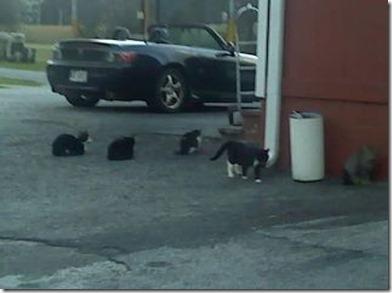 cats feb 23