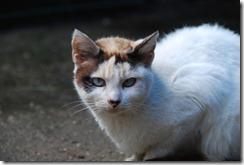 gato DSC_052116