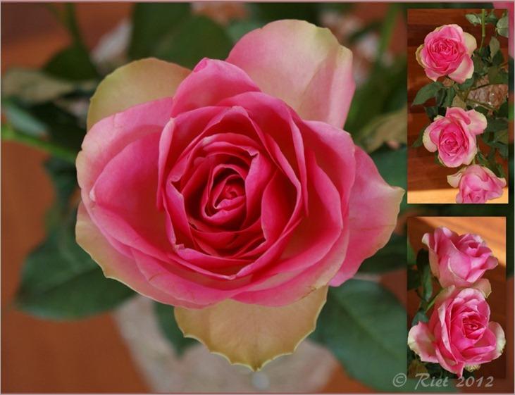22-11-2009, huizen en rozen2