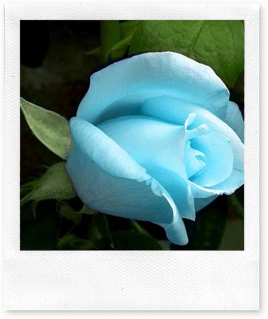 blue_rose