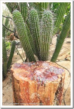 141231_Tucson_Bachs_0060