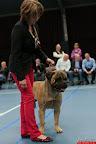 20130510-Bullmastiff-Worldcup-0503.jpg