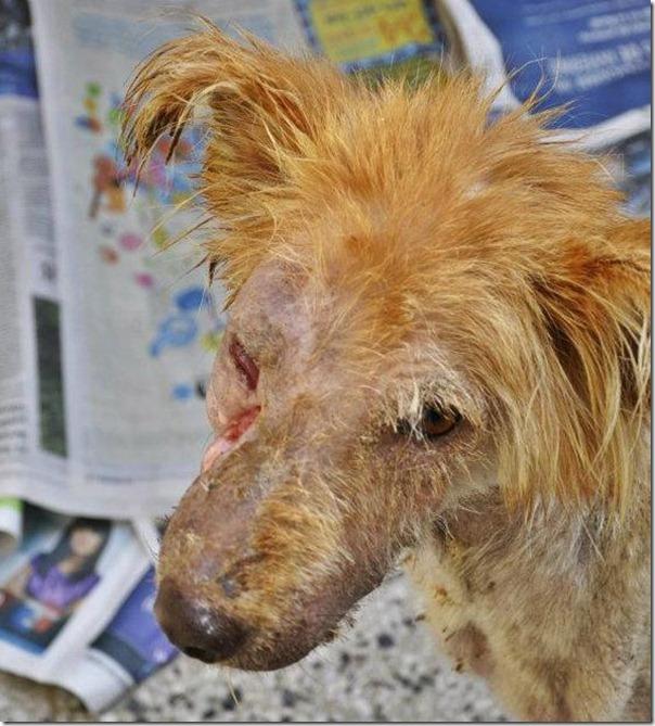 História incrível do salvamento de um cão (2)