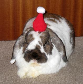 Marmite Christmas Hat