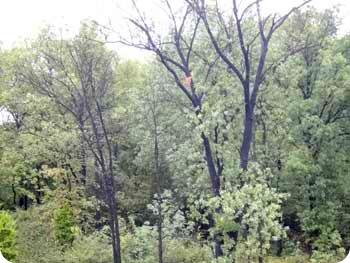 8-black-trees