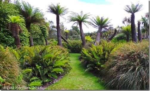 tree-ferns