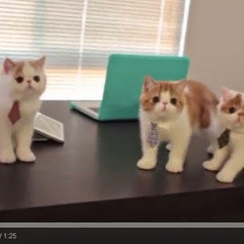 Τρία μικρά γατάκια ψάχνουν για μια  θέση εργασίας