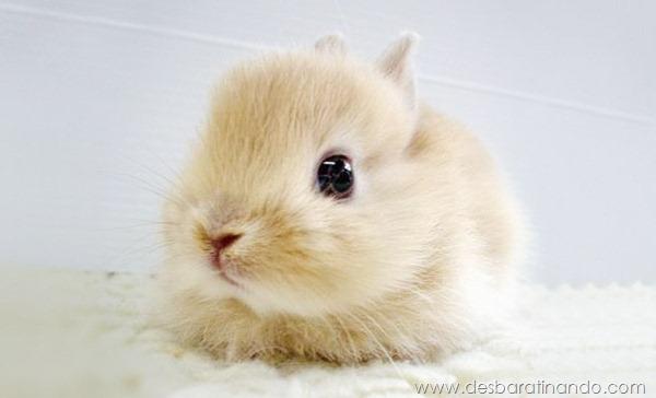 filhotes-de-animais-fotos-cute-cuti-desbaratinando (7)