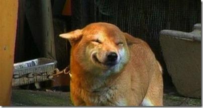 fotos gradiosas de perros capitanpalomo (19)