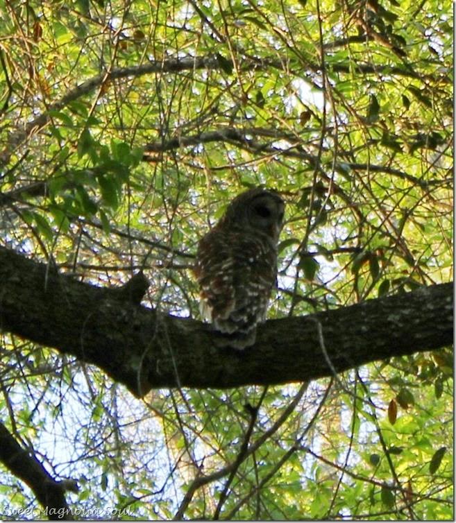 owl3 blog