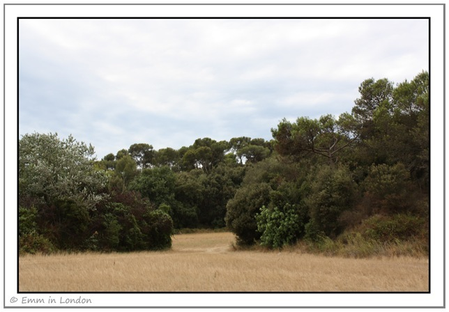 Nature in Santa Susanna