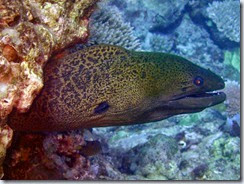 Diving south of Lamen Bay_06 21 14_0065