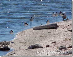 Salton Sea CA 029