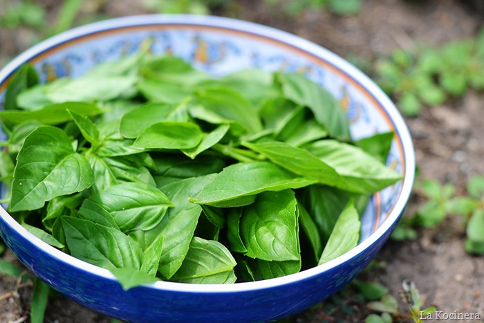 picked basil 2