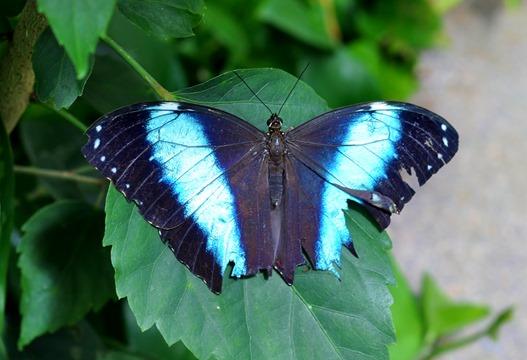 2013-07-05 butterfly pavilion (1)