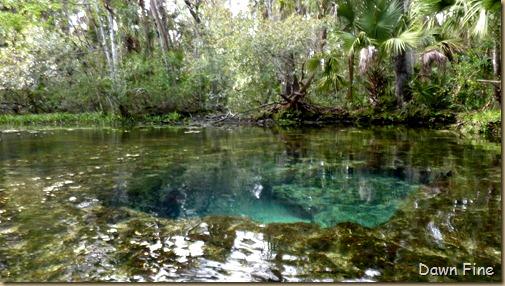 Chassahowitza River canoeing_225