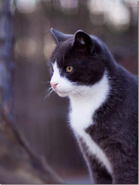 cat12-176