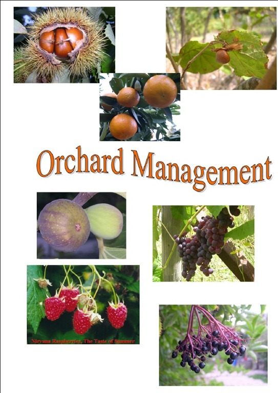 [orchard%255B5%255D.jpg]