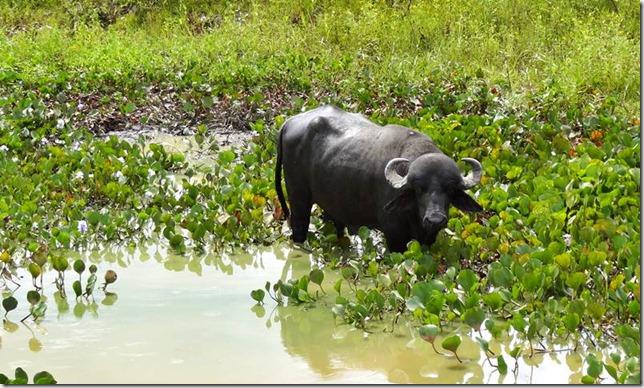 Pantanal_DSC08471