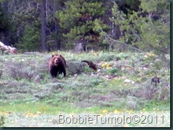 10.399.Cubs.Pilgrim.Creek.06.23.11