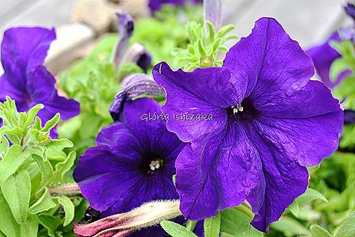 Azul - Glória Ishizaka 30