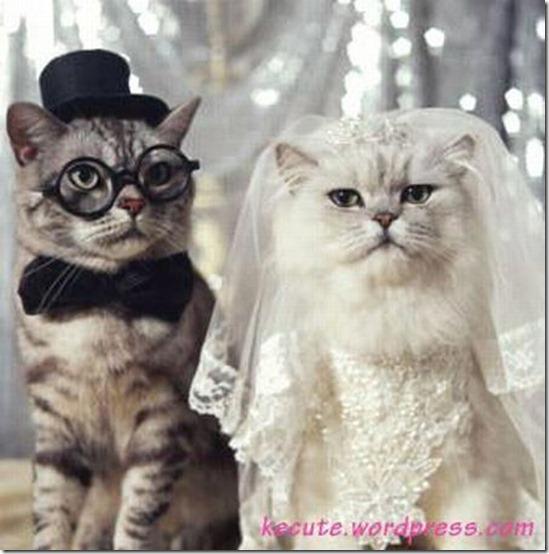 gatos y perros en traje de novio (2)