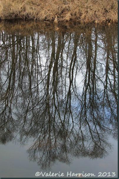 11-upsidedown-trees