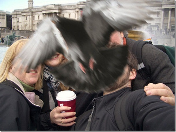 silly-pigeons-birds-9