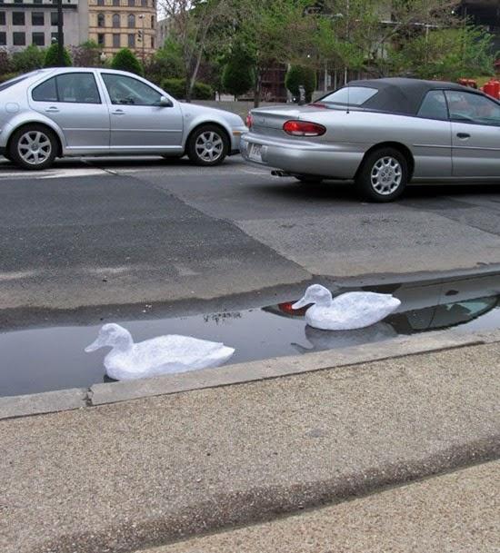 Selotape swans
