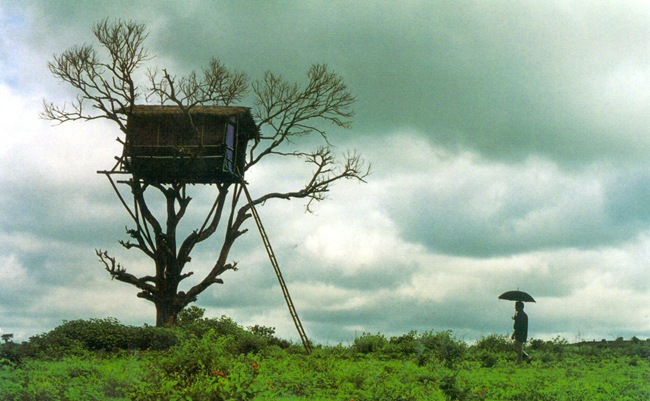 Kerala tree house