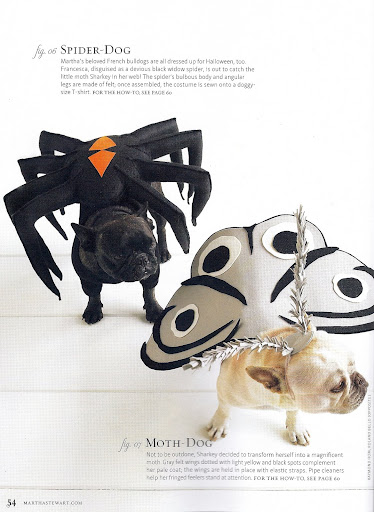 But look how adorable we look in these costumes - Spider-Dog and Moth-Dog!