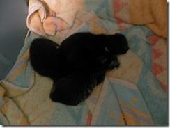 kittens day 1-3  07
