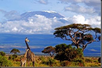 kilimanjaro-giraffe-lrg